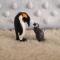 Mamá Pingüino