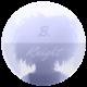 B. Knight