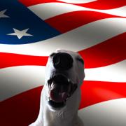 Photo of Dog Nation