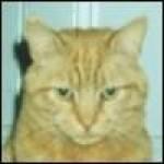 Roseandcats