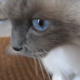 perrythebirman