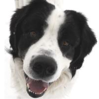 Frauen, Männer & Hunde - Missverständnisse vorprogrammiert