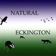 Natural Eckington