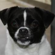 Fergus Gomez Dog