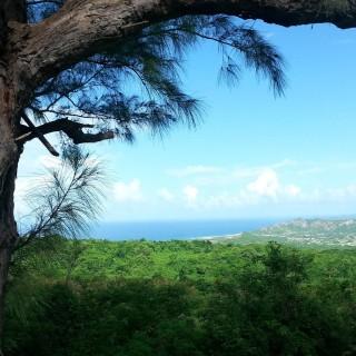 caribbeanmarvel