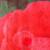 wiredtoinspire's avatar