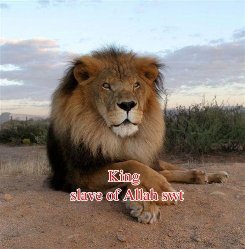 King-slaveofAllah