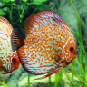 aquariumidea