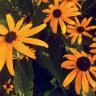 plantloverr33