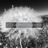 Estela Photography