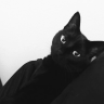 Cat Kydd