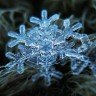 snowy0730
