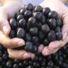 berrycapsules
