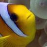 A Fish Named Karen