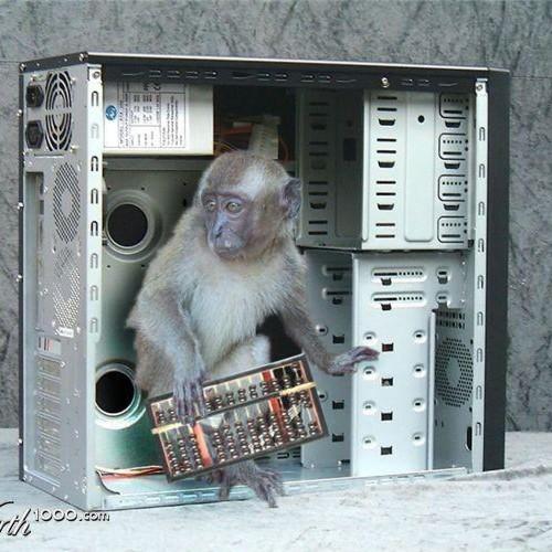 Web Monkey