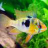 aquariumfishtips