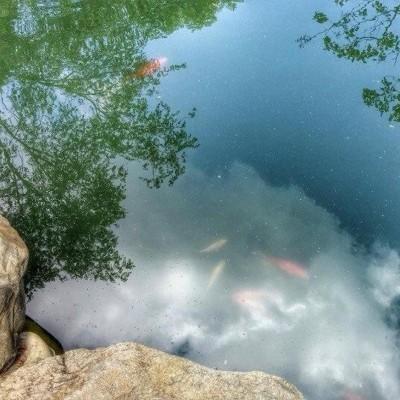 Liberty Zen – Natural Health, Conscious Freedom
